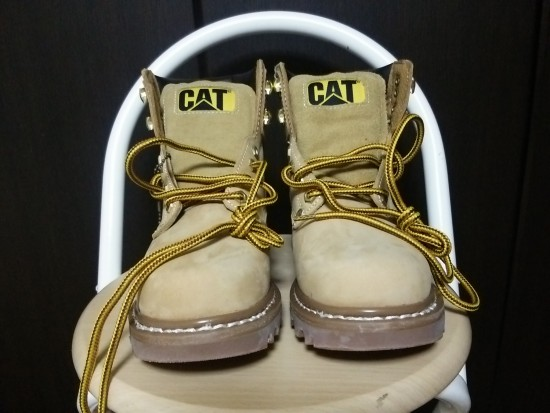 cat 正面
